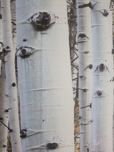 Aspens colours - Details of the Dibond direct print