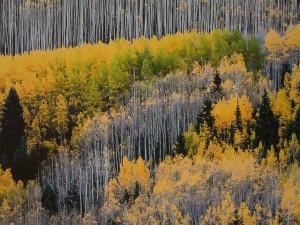Maroon Creek valley, près d'Aspen, CO - Détail du tirage direct sur Dibond